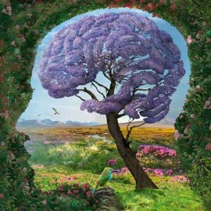 evolution brain