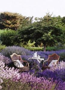 Lavender talk