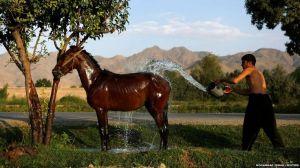 afghan man washing horse
