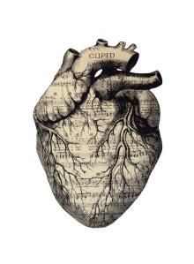 art and anatomy