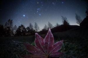 Masahiro Miyasaka - Sirius, Constellation Orion and Pleiades very visible