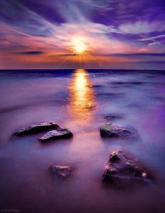 Violet by Yousif Aziz