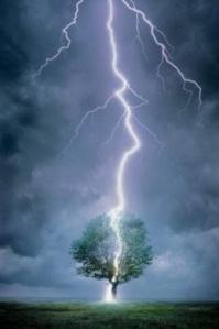 lightning strikes a tree