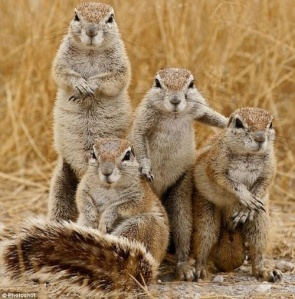 squirell family