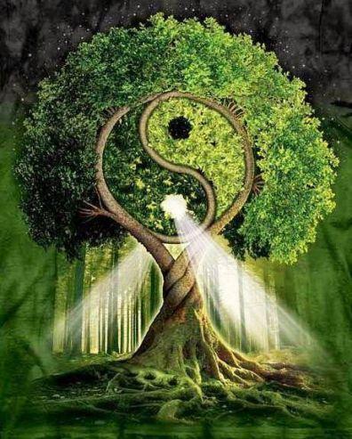 ying yang tree
