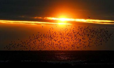 A flock of seabirds fly down the coast near Whitley bay, north Tyneside