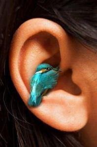 little bird in my ear