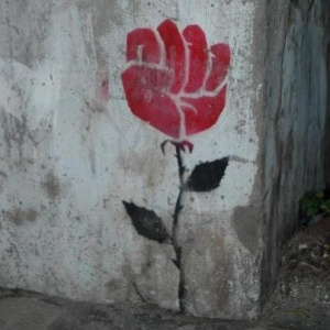 Protest rose