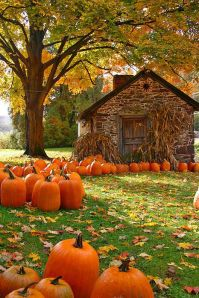 Pumkins Bucks County in the Fall