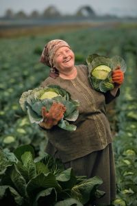 woman farmer harvesting cabbages, Hlynske, Ukraine- Jim Richardson, National Geographic