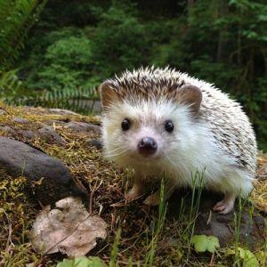 biddythehedgehog