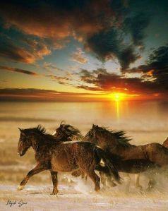 Free spirits - Itzig Gur