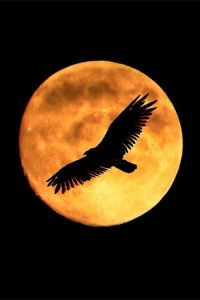 full moon eagle