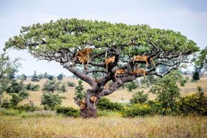Central Serengeti, Tanzania, Bobby-Jo Clow-Caters News Agency