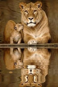 Lion mother and baby