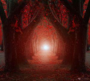 Beautifully Enchanting Pathways in Nature by Ildiko Neer