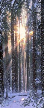 Solstice in the Olympic National Park of northwestern Washington -John Shephard on StoreOEP