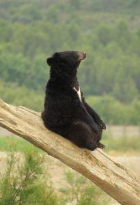 Meditation bear