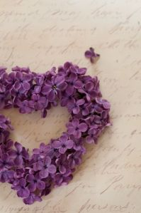 Heart shaped wreath of petals of Syringa vulgaris in spring