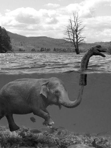 Elephant humor