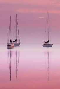 pink-dawn