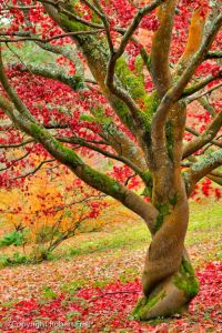 autumn-twist-by-robert-friel
