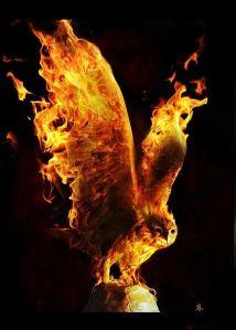 fire-owl