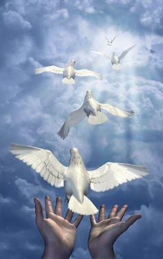doves-miss-memphis