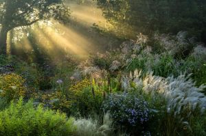 first-rays-by-volker-michael