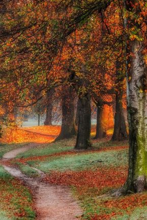 Golden Polish autumn by Piotr Krol