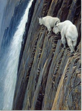 Sheer Drop, 1980 Robert Bateman