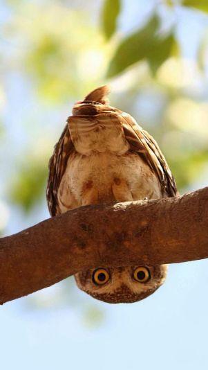 upside down owl artist unknown