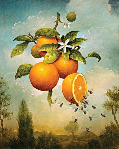 Kevin Sloan - Abundance oranges
