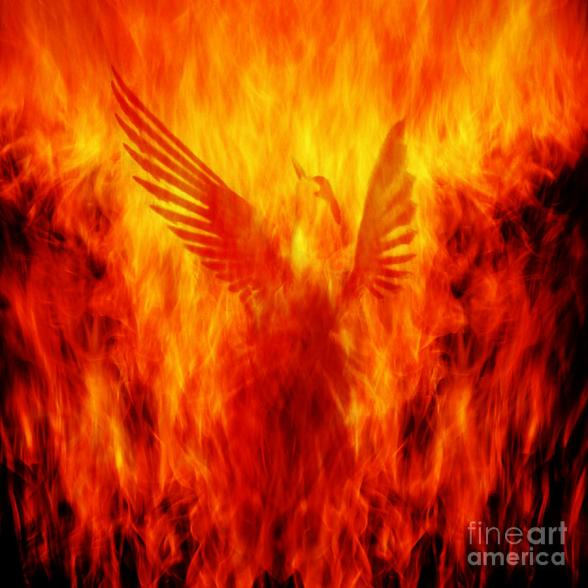 phoenix-rising-andrew-paranavitana