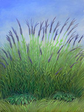 David Diethelm - Lavender